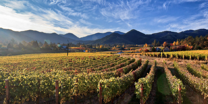 vineyard with mountains in background